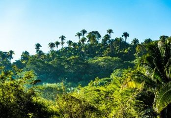 Tropical Forest Vegetation Southeast Asia